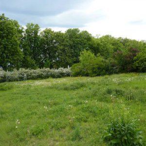 Blick auf eine grüne Ecke des Fuchshofs